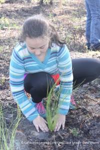 Longleaf pine planing